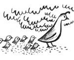 doves copy